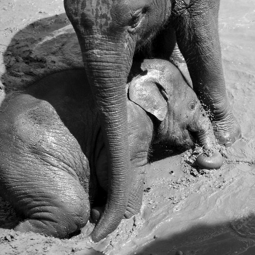 elephant nature park 2010294 - Version 2 | by electra-cute