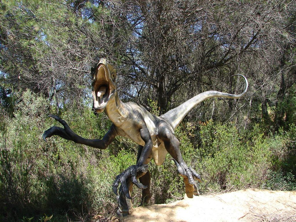 Image Result For Raptors