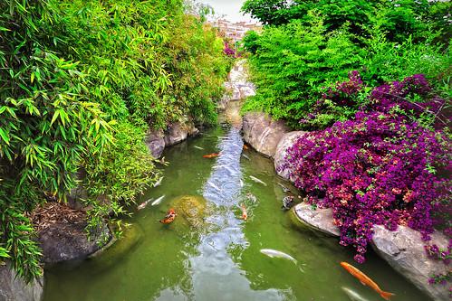 Estanque de carpas koi la carpa koi es el rey de los for Plantas para estanque peces koi