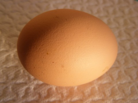 Chicken-Eggs_339411-480x360 | by Public Domain Photos