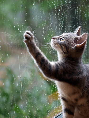 Sylvie's first rain | by Stirred_For_A_Bird