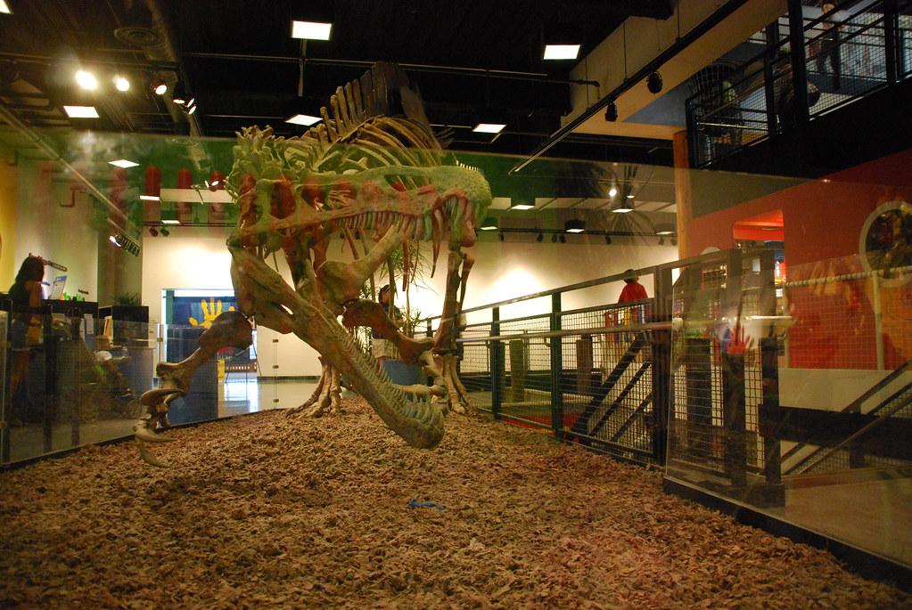 Chicago 222 Navy Pier Children 39 S Museum Dinosaur Bones