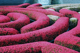 Flower hedges at the Getty | by Kaarin T