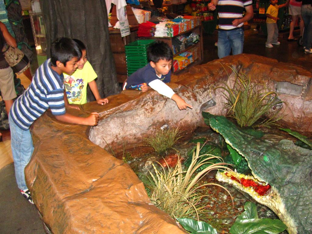 Rainforest Cafe Alligator