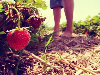 Strawberry Field | by CoolMcFlash