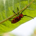 Red spotted insect