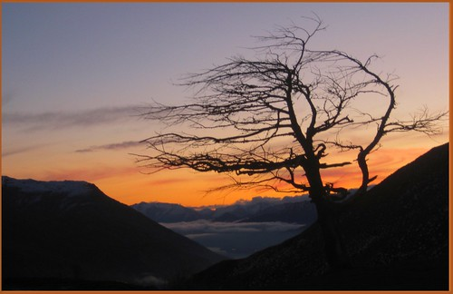 Lonely Tree Wanaka | by Dr Wobble