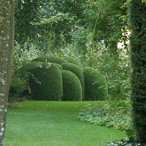 les jardins de s ricourt topiaires en boules olibac flickr. Black Bedroom Furniture Sets. Home Design Ideas