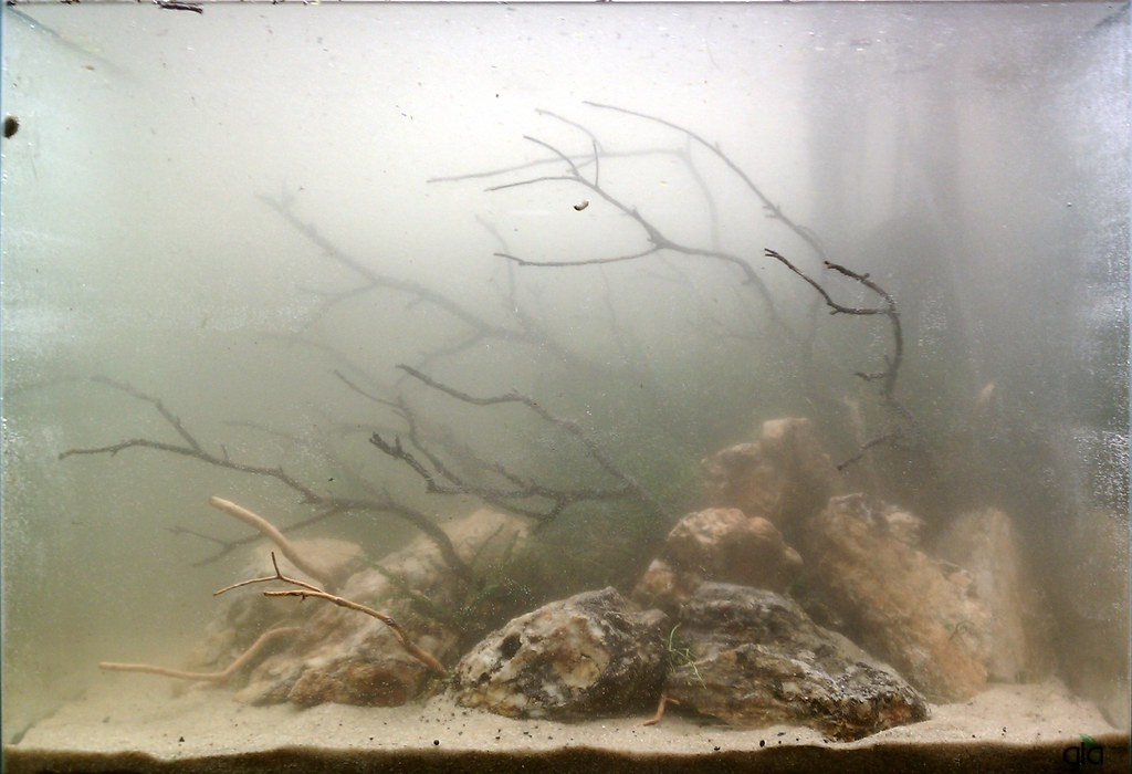 33g new aquascape kris flickr for Fish tank cloudy