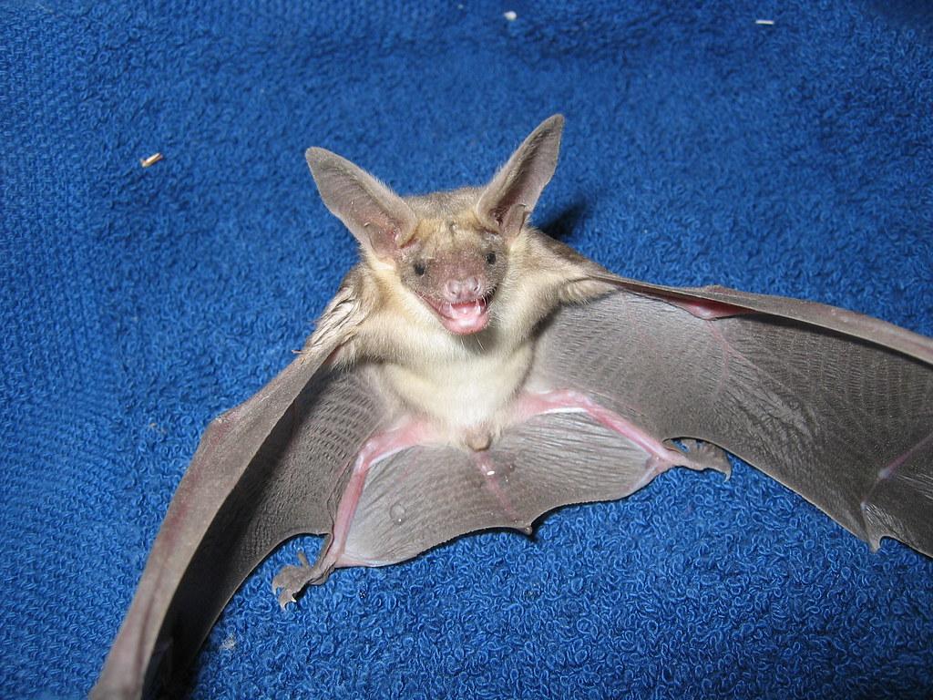 Cat  Bat