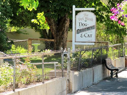 Free Dog Wash Pet City