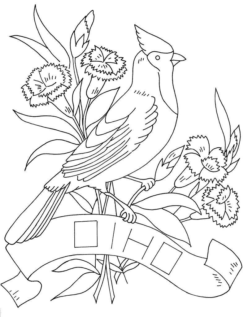 Ohio state bird and flower copied from a previous copy for Ohio state coloring pages