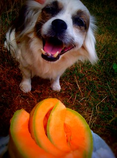 august 7 dog + cantaloupe | by wockerjabby