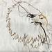 Eagle Embroidery Illustration