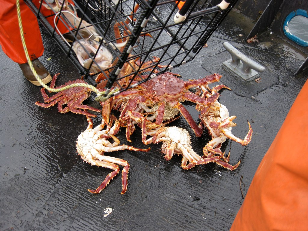 bay area vendors and 2016 alaskan king crab season