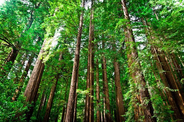 Tree Houses Big Island