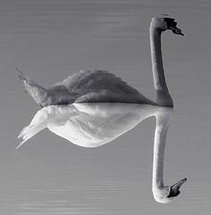 joseph swan photos on flickr flickr