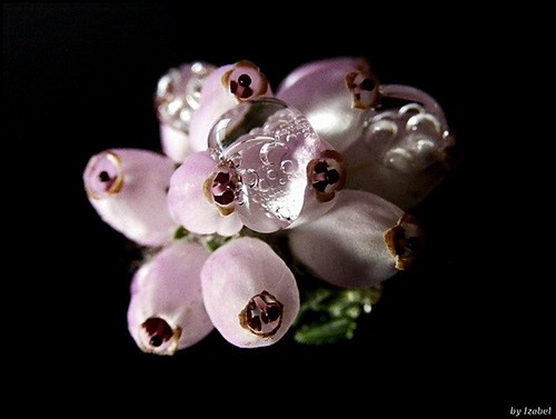 Water drops #3 | by Izabel photography