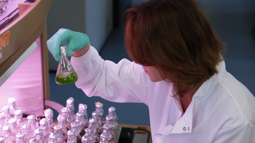 A Department of Plant Sciences researcher examines a flask of algae | by Cambridge University