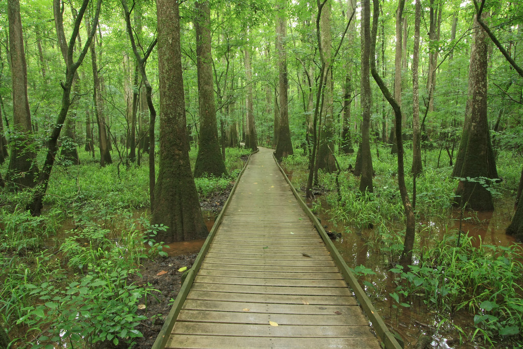 Congaree Swamp Low Boardwalk Trail Congaree National Par Flickr