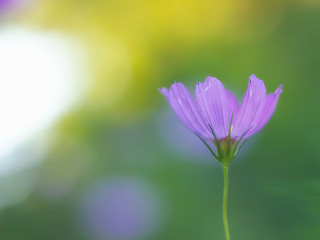 flower in the light | by zoomyboy.com