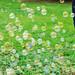 Bubbles_00003