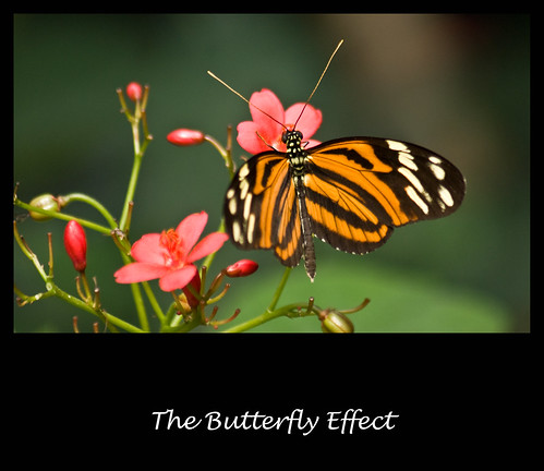 The Butterfly Effect | by rene1956 (Burning the Midnight Lamp)