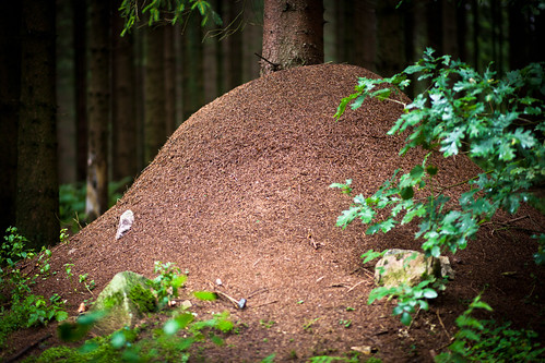 Giant anthill