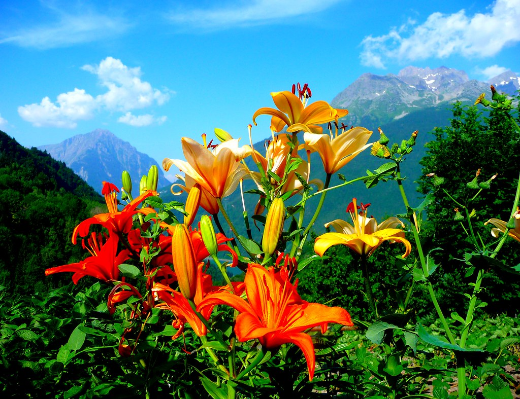 feu artifice fleurs lys oranges montagnes des alpes flickr. Black Bedroom Furniture Sets. Home Design Ideas