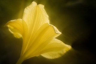 Light Trumpet | by johnnyoptic