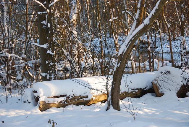 Pr s des marrais sauvages du parc malou bruxelles for Parc sauvage 78