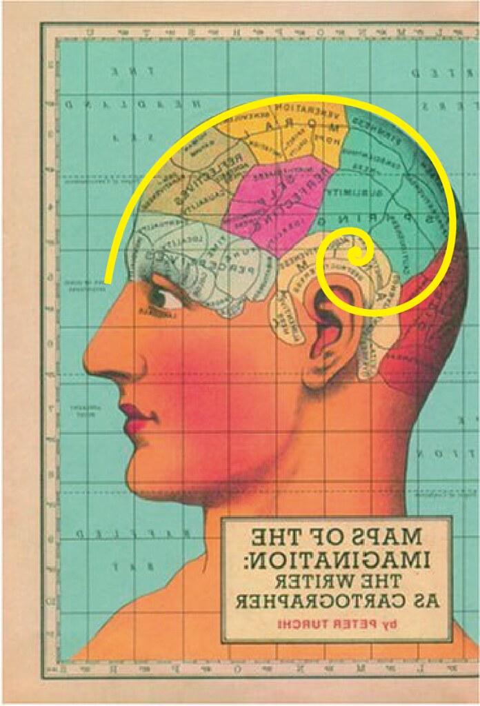 Human Brain Evolution   A golden spiral over lay on a ...