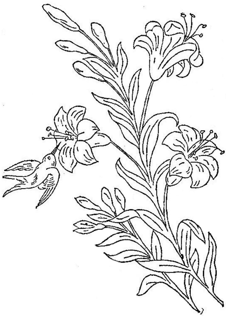 Honeysuckle Flower Line Drawing : Ingalls bird and honeysuckle this came from