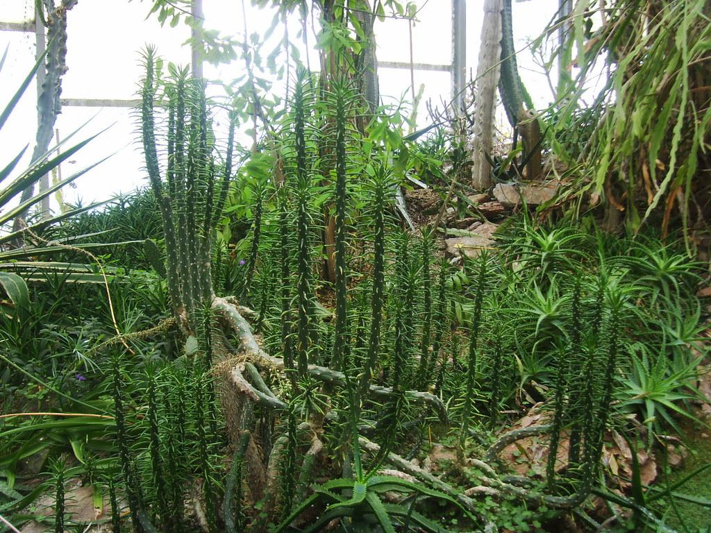 Jardin botanique du jardin des plantes de lille digital for Jardin du plantes