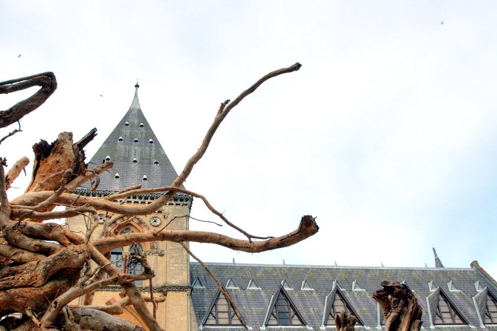Natural History Museum Nye