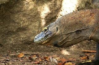 Komodo And Rinca Island Tour