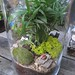 Pilars Terrarium Workshop