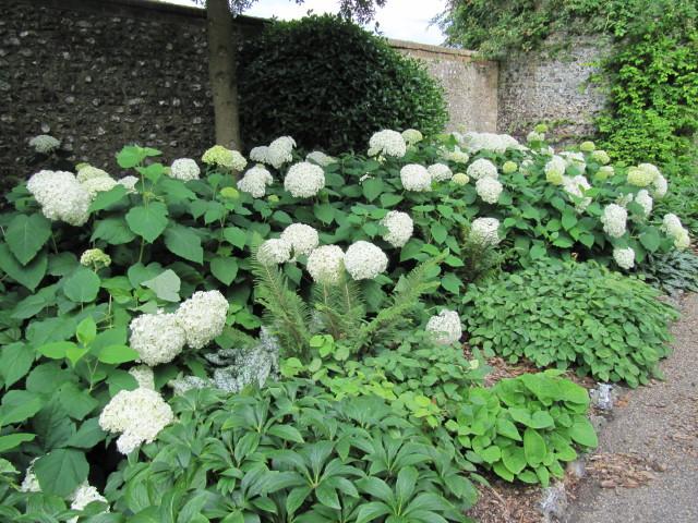 bordure blanche jardin