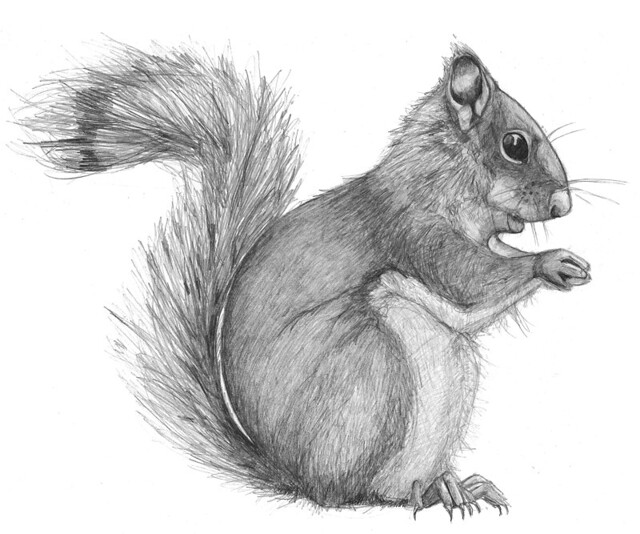 how to draw a baby squirrel