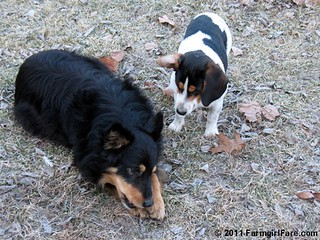 Bear and Bert 4 | by Farmgirl Susan