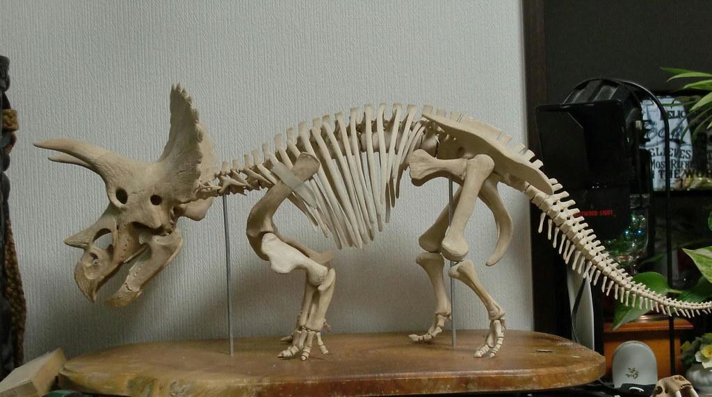triceratops skeleton model taburinsdino flickr