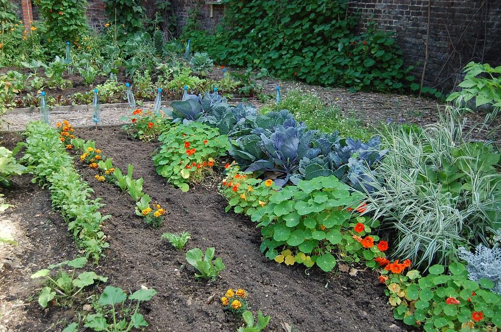 tourcoing le jardin botanique coin potager gillyan9 flickr. Black Bedroom Furniture Sets. Home Design Ideas