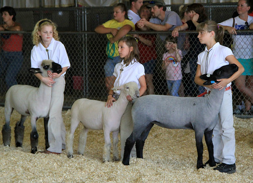 Jr. sheep showmen | by baalands