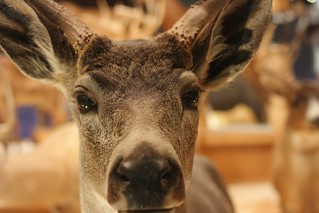 Deer at National Science Museum | by frau-klein