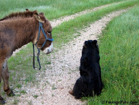 Donkey Doodle Dandy and Bear 2 | by Farmgirl Susan