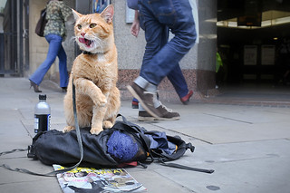 Bob the Big Issue Cat | by belkus