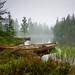 Norwegian Nature [Explored - Frontpage #4]