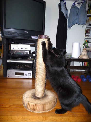 Mister Blackie Tests the Scratching Post | by Push The Other Button