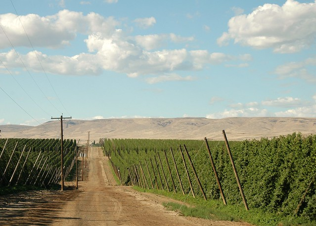 hop yards in moxee flickr photo sharing