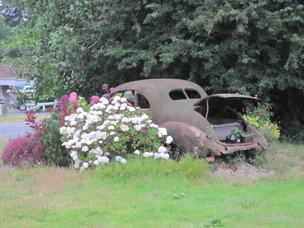 Rusty old car garden   Pearl Purple   Flickr